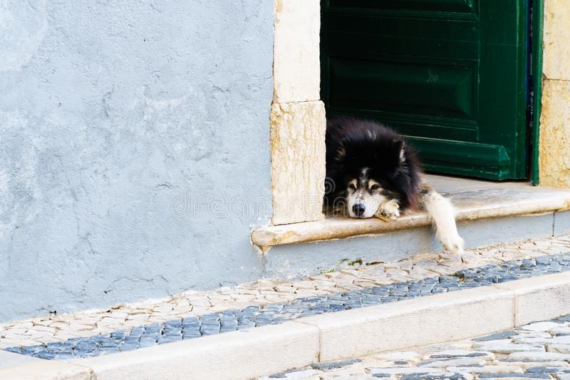 Zrelaksowany psi kłaść przy otwarte drzwim dla sjesty fotografia royalty free