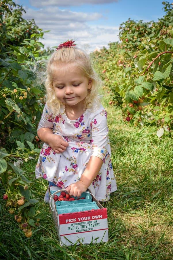 Zrywanie jagody w jesieni fotografia stock