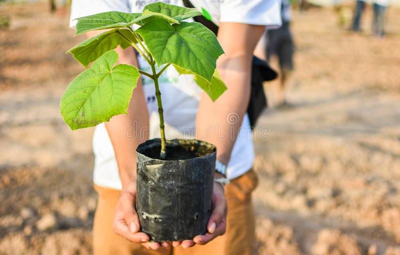 Zu Bäume, von Leuten zu pflanzen beginnen lizenzfreies stockbild