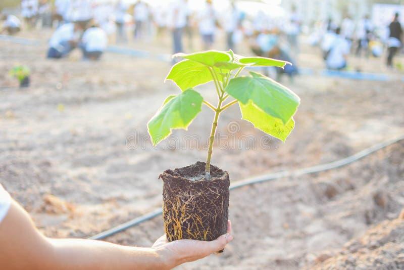 Zu Bäume, von Leuten zu pflanzen beginnen stockfotografie