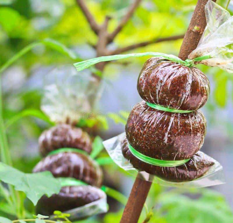 Baum Umpflanzen zu den baum verpflanzen stockbild bild botanik ausschnitt