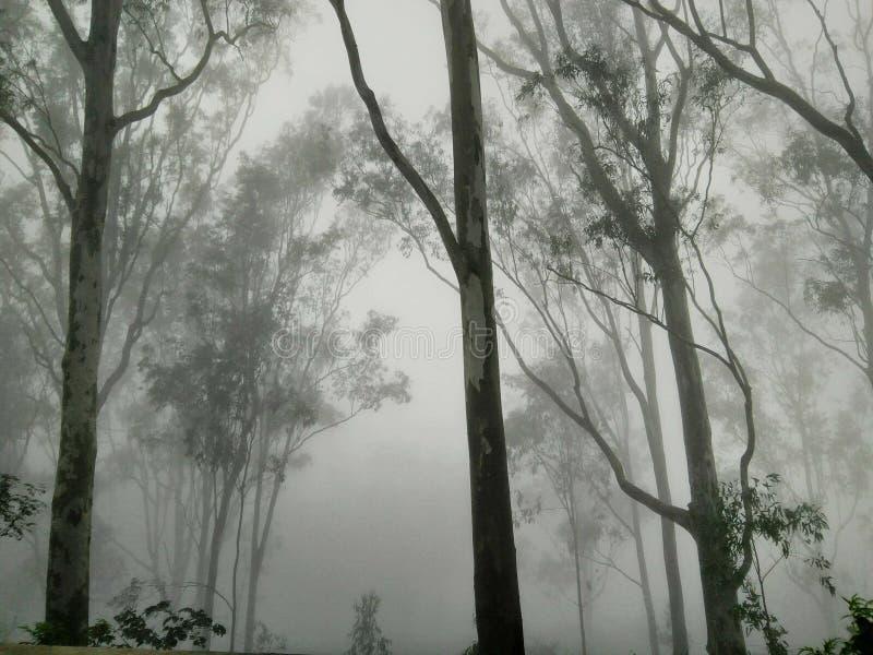 Zu im Wald im Winter lizenzfreie stockfotografie