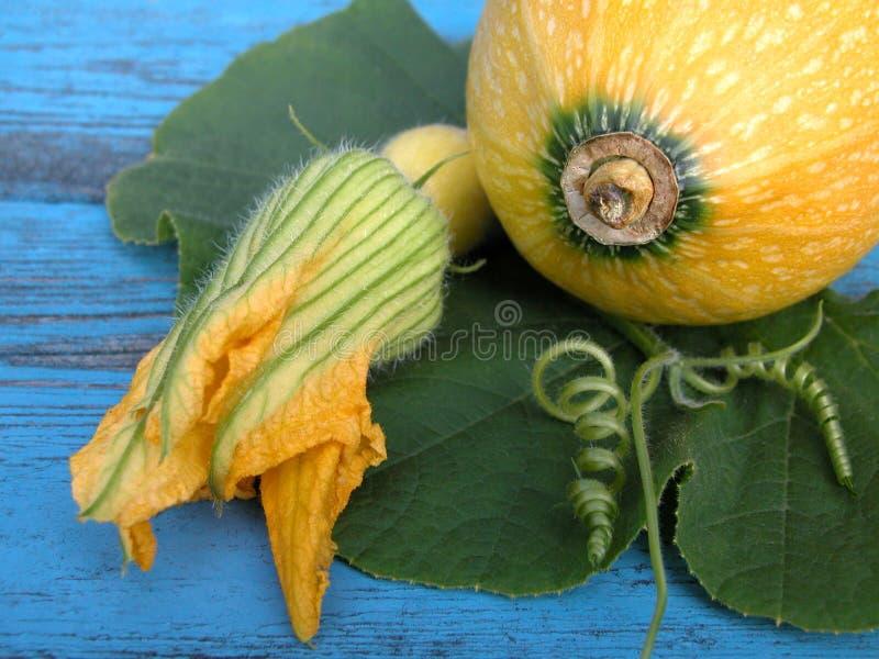 Download Zucca immagine stock. Immagine di saporito, zucche, vegetariano - 215343