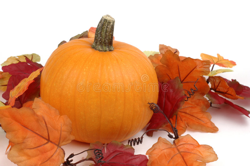 Download Zucca immagine stock. Immagine di caduta, festive, ottobre - 3134711