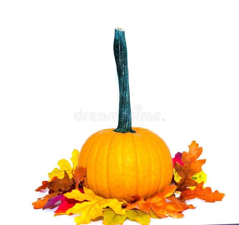 Zucca arancio con le foglie variopinte isolate su fondo bianco immagine stock
