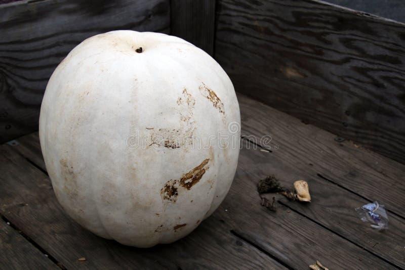 Zucca bianca su esposizione fotografie stock