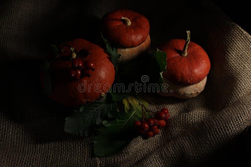 """Zucca decorativa con il viburno e FrÅ """"ctÅ """"s Rosa, fotografato nel ` scuro del ` fotografia stock"""