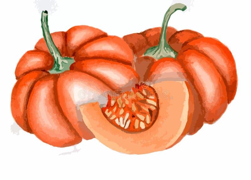 Zucca del disegno, zucca arancio, arte delle verdure illustrazione di stock