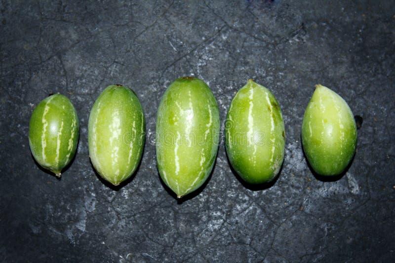 Zucca dell'edera nel fondo nero fotografia stock
