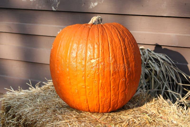 Zucca di autunno fotografia stock
