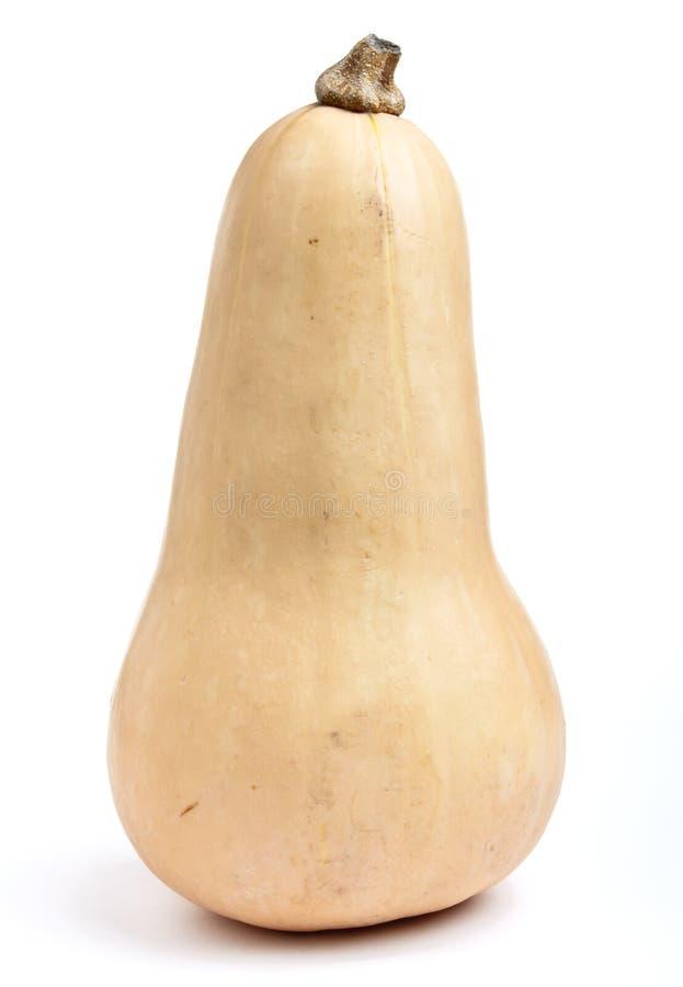 Zucca di Butternut immagini stock