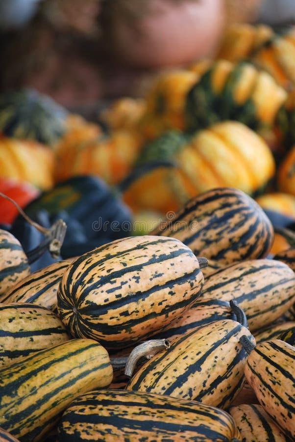 Zucca di Delicata - prodotti del supporto dell'azienda agricola immagini stock
