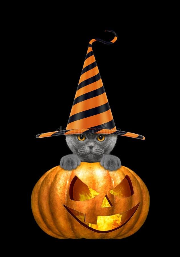 Zucca di Halloween con il gatto sveglio in cappello divertente - isolato sul nero immagini stock