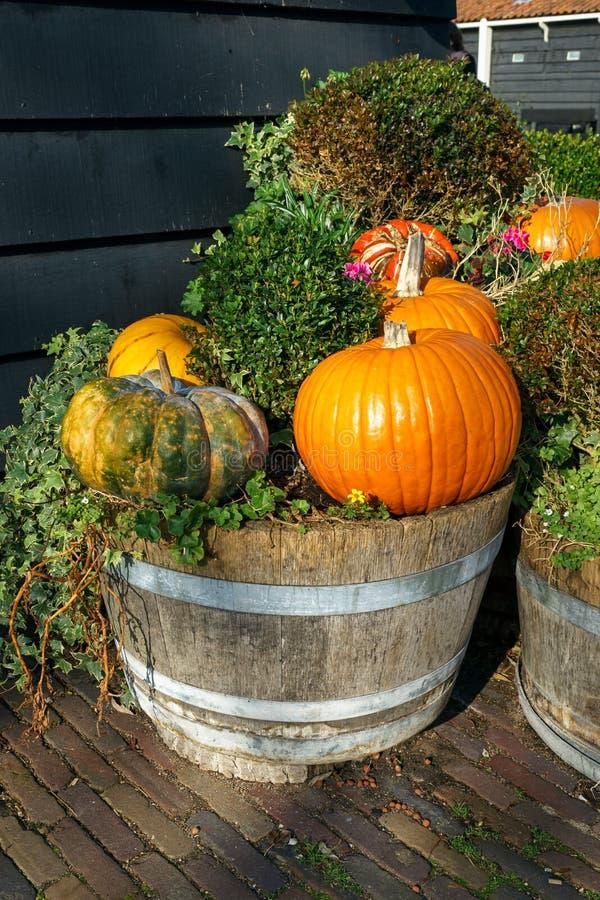 Zucca e zucca assortite fresche in vaso di legno fatto dal vecchio barilotto di vino un giardino di autunno immagini stock