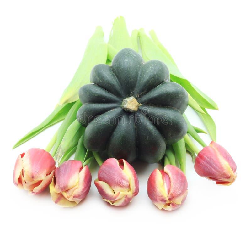 Zucca e tulipani verdi fotografie stock