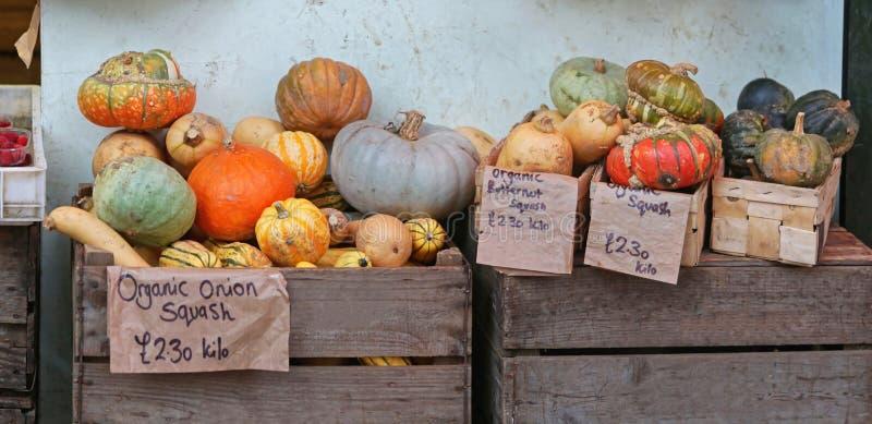Zucca e zucche fotografia stock