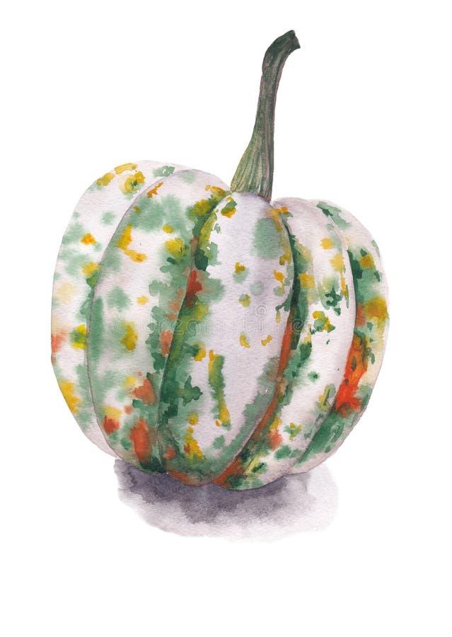 Zucca fatta con l'acquerello illustrazione di stock