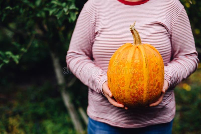 Zucca matura, organica, arancio nelle mani Giorno pieno di sole di caduta Un yo immagine stock libera da diritti