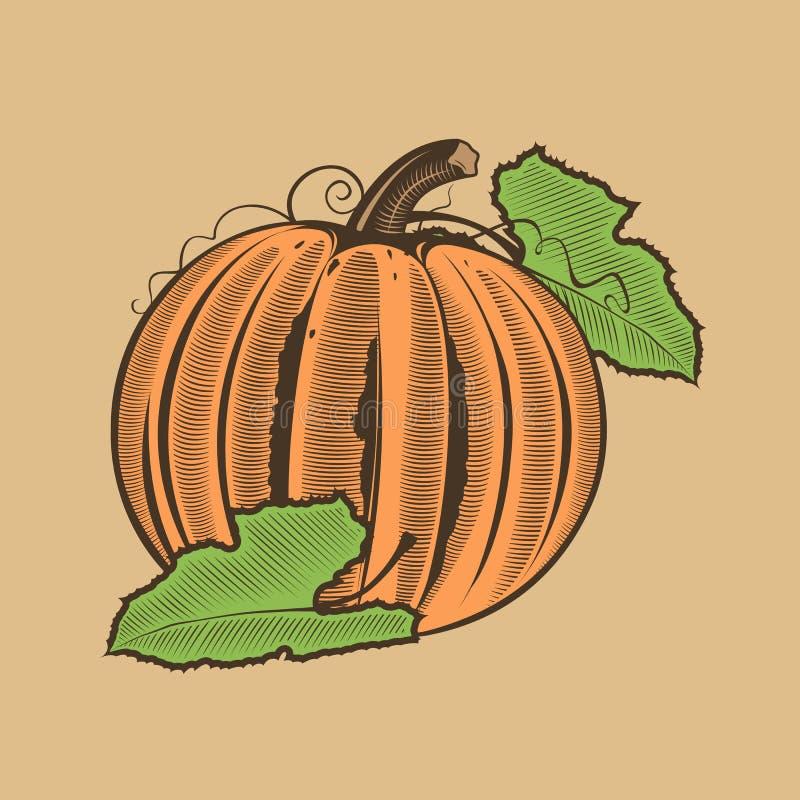 Zucca nello stile d'annata Illustrazione colorata di vettore illustrazione di stock