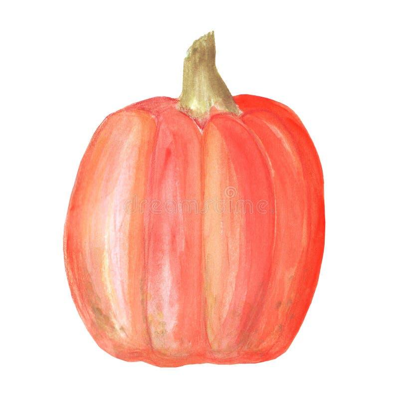 Zucca Pittura dell'acquerello sulla priorit? bassa bianca Alimento crudo vegetariano del raccolto di autunno immagini stock libere da diritti