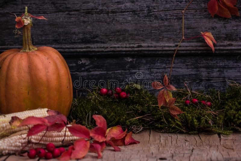 Zucca, zucca Priorità bassa felice di giorno di ringraziamento Autumn Thanksgiving Pumpkins sopra fondo di legno, natura morta Be immagini stock