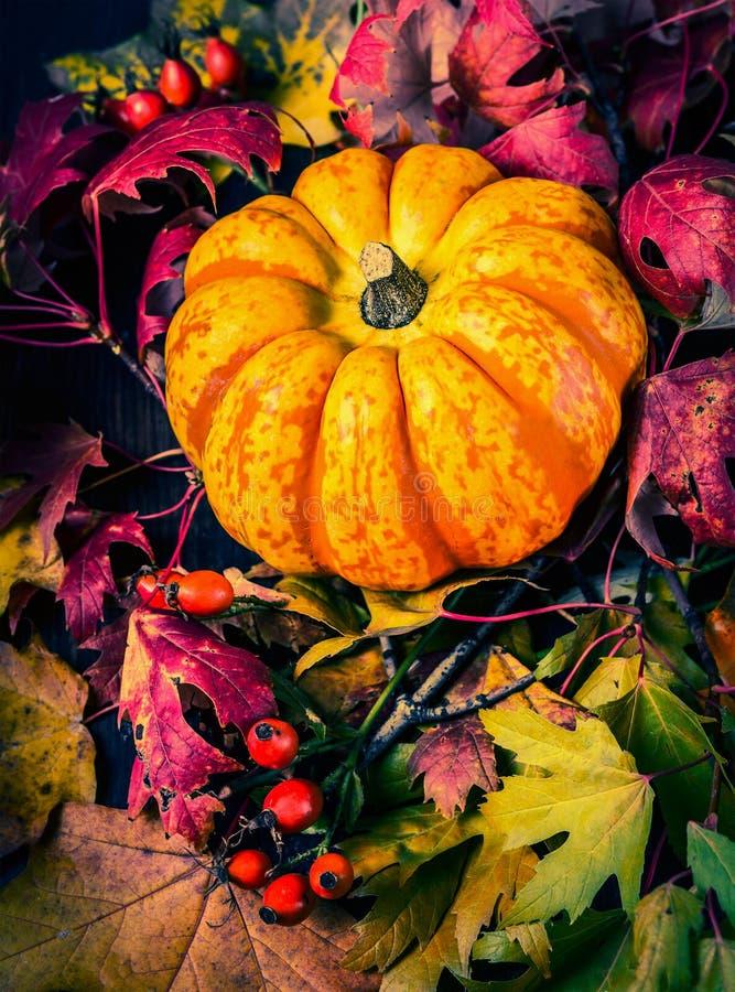 Zucca sulle foglie di autunno, fine su fotografie stock libere da diritti