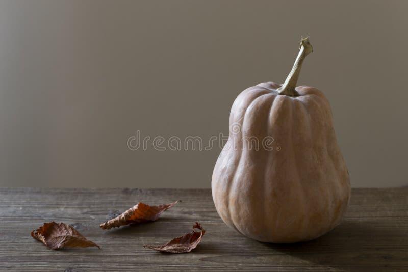 Zucche arancio con le foglie di caduta fotografie stock libere da diritti