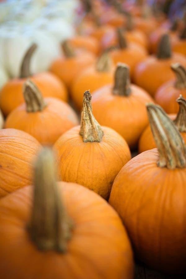 Zucche arancio del raccolto immagini stock libere da diritti