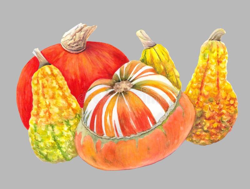 Zucche arancio e gialle isolate su fondo grigio Illustrazione dell'acquerello delle verdure di autunno Ancora pittura di vita illustrazione vettoriale