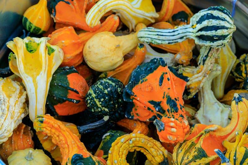 Zucche Assorted fotografia stock libera da diritti