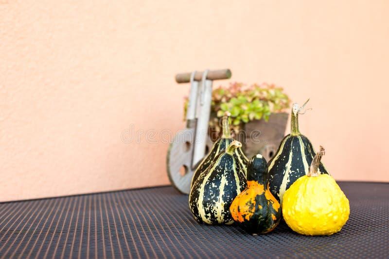 Zucche decorative fotografia stock libera da diritti