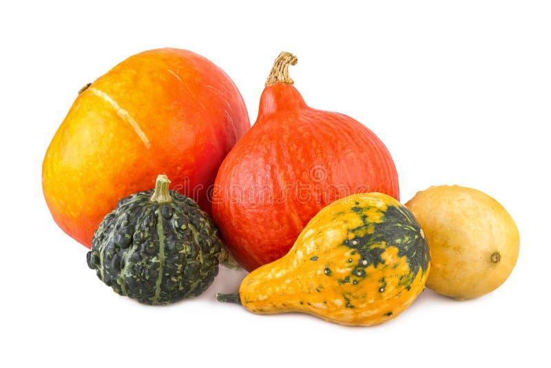 Zucche della zucca assortita variopinta delle zucche varie ornamentali fotografia stock