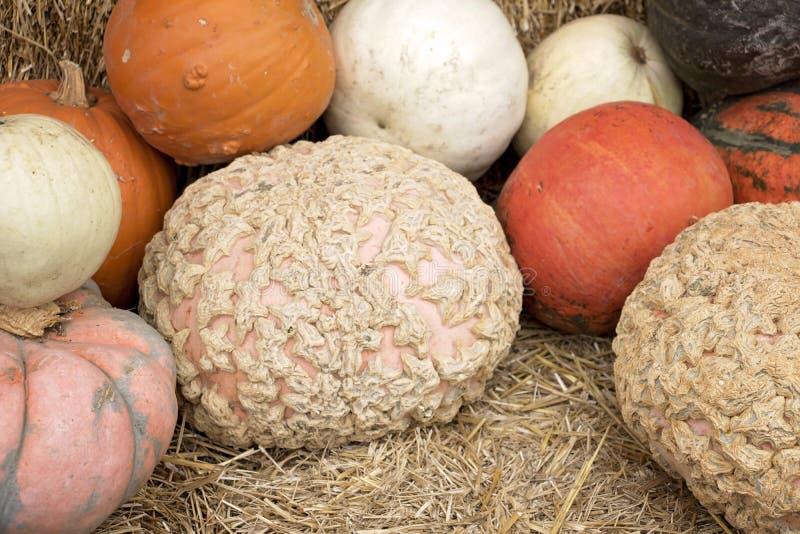 Zucche e zucche al supporto dell'azienda agricola nella caduta fotografie stock libere da diritti