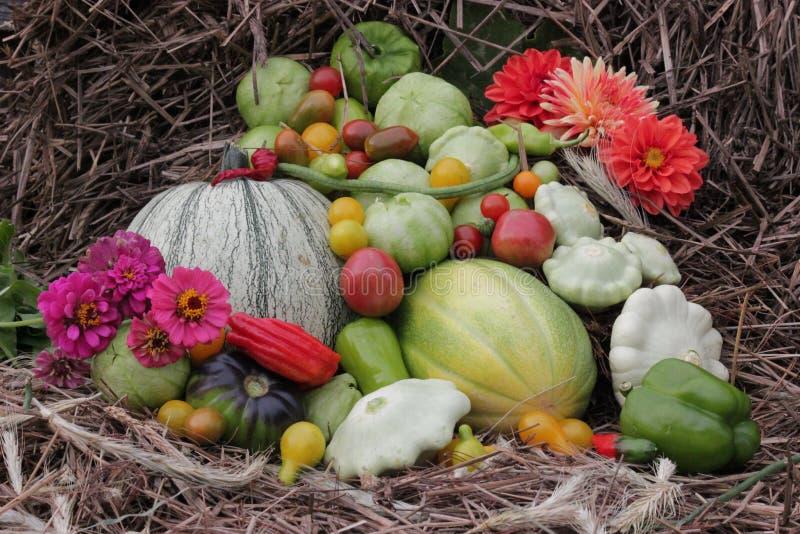Zucche e pettini e fiori di caduta su paglia immagini stock