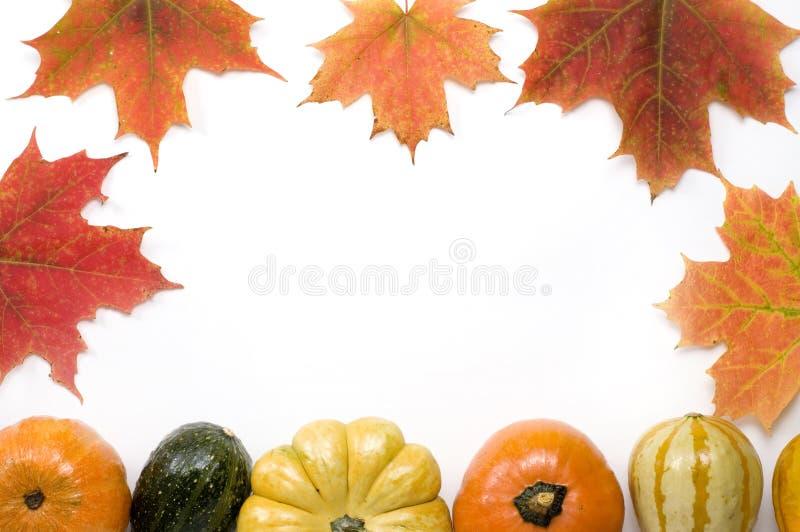 Zucche e zucca di ringraziamento immagini stock