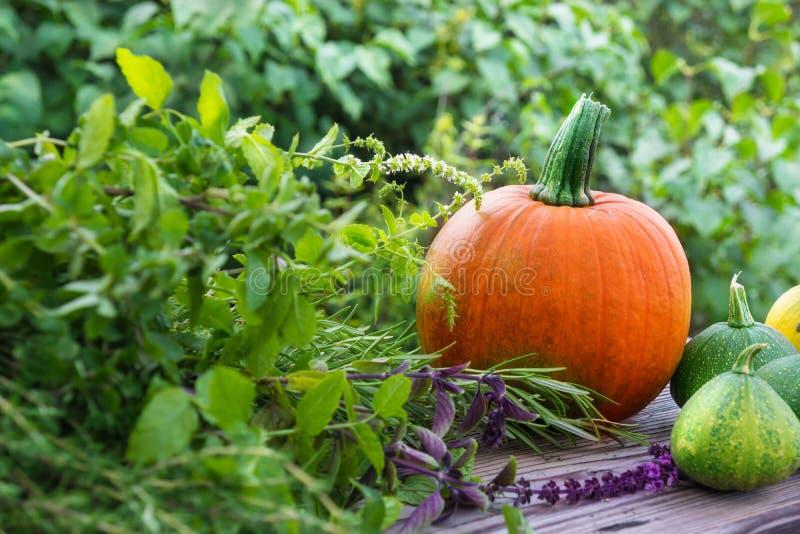 Zucche ed erbe del giardino immagini stock