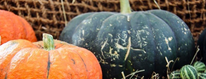 Zucche mature, giallo, patissons arancio a strisce e piccoli verdi della zucca di autunno con i pomodori ciliegia, erba asciutta  fotografia stock libera da diritti