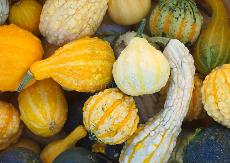 Zucche multicolori della zucca al mercato per Halloween o il ringraziamento fotografia stock