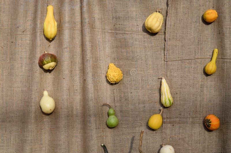 Zucche su un fondo intrecciato di canapa fotografie stock