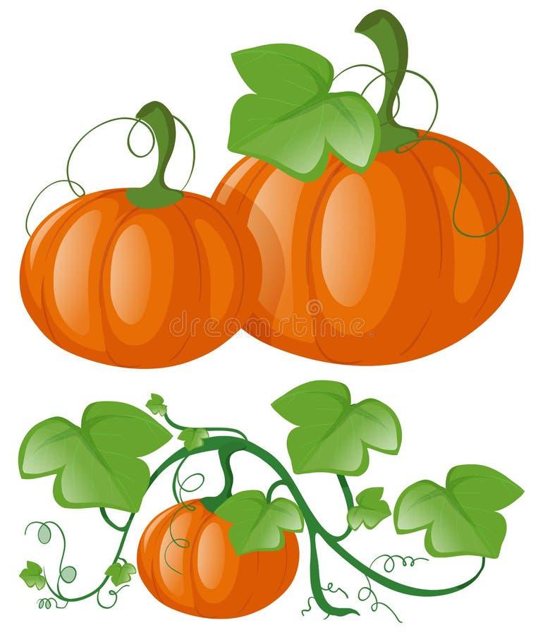 Zucche sulla vite verde illustrazione vettoriale