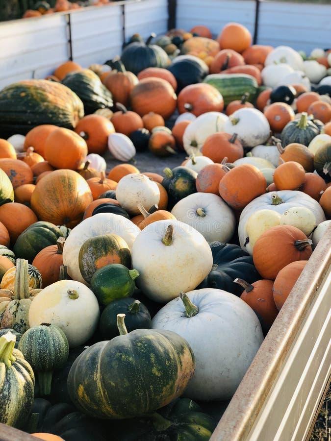 Zucche variopinte su un rimorchio di trattore in autunno fotografia stock libera da diritti