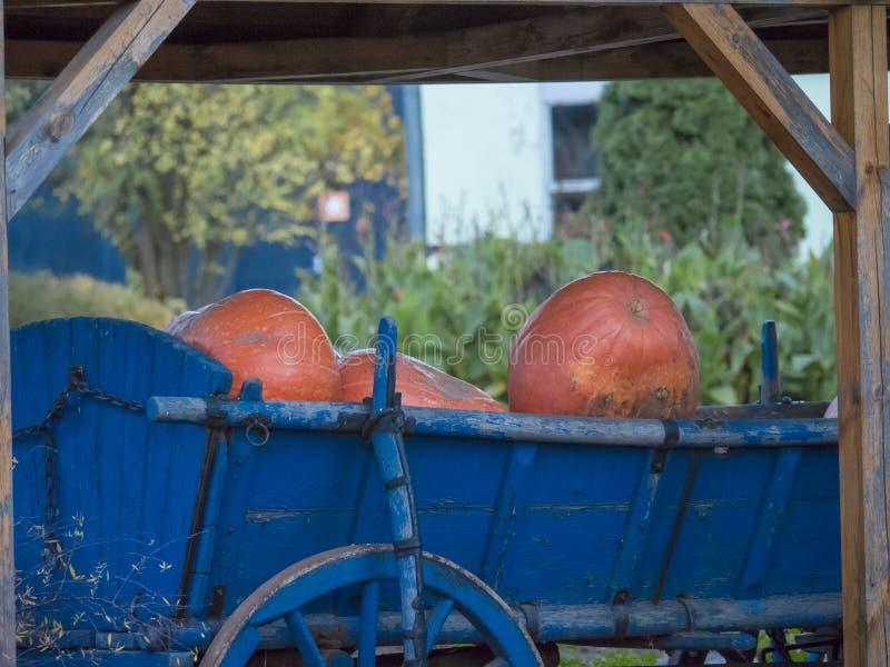Zucche in vecchio vagone blu con la ruota di legno fotografia stock