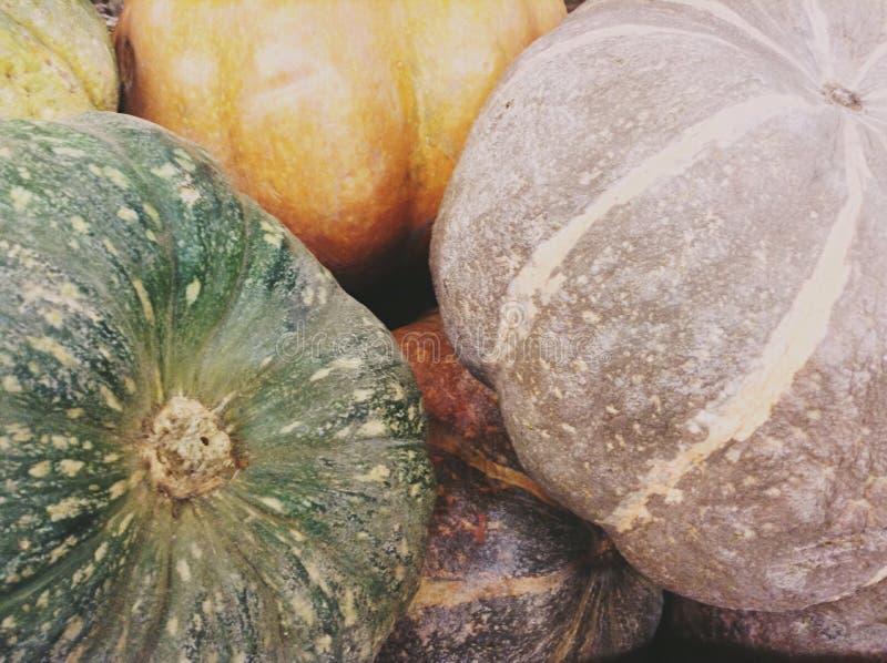 Zucche verdi ed arancio fotografie stock libere da diritti