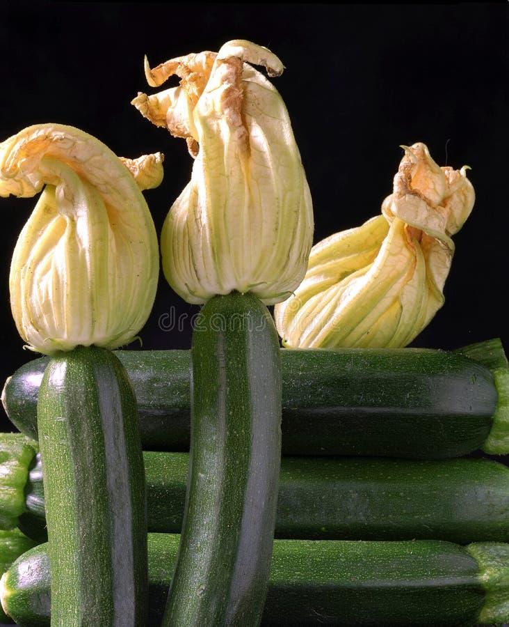 Zucchine Stock Photography