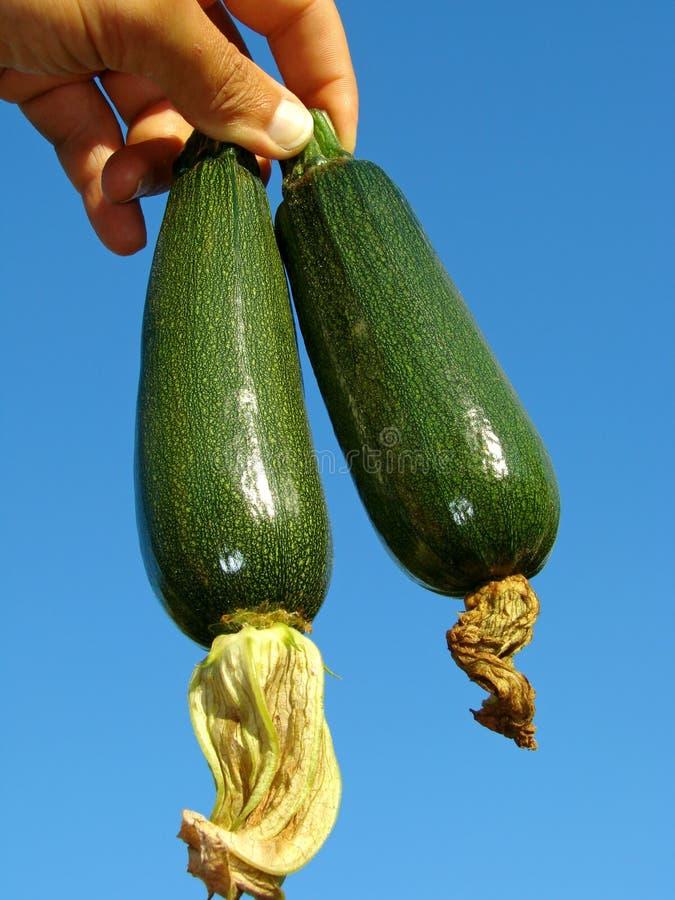 zucchini стоковая фотография