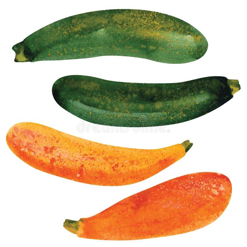zucchini vektor illustrationer