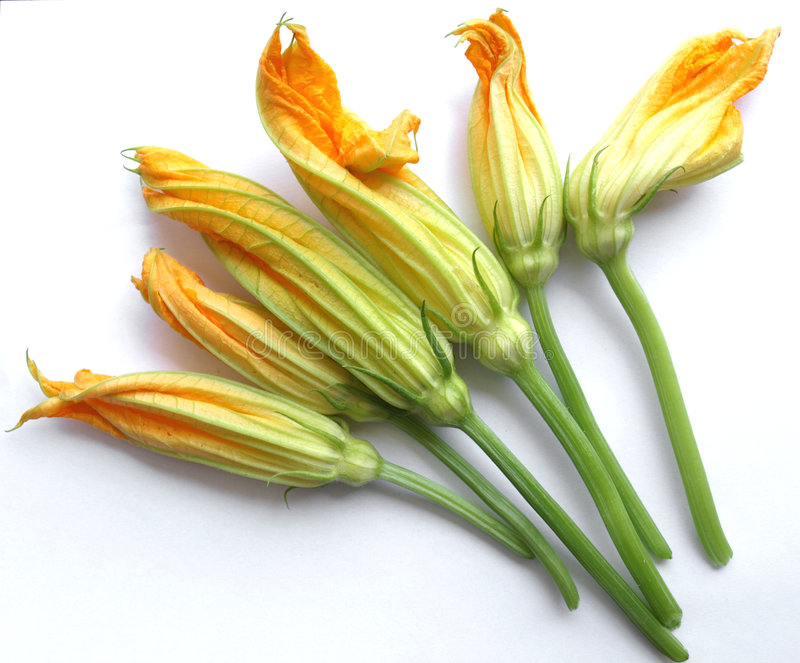 Zucchini Courgette Flower Stock Images