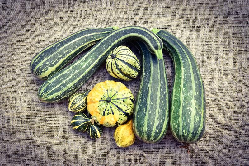 Zucchini in different sizes stock image