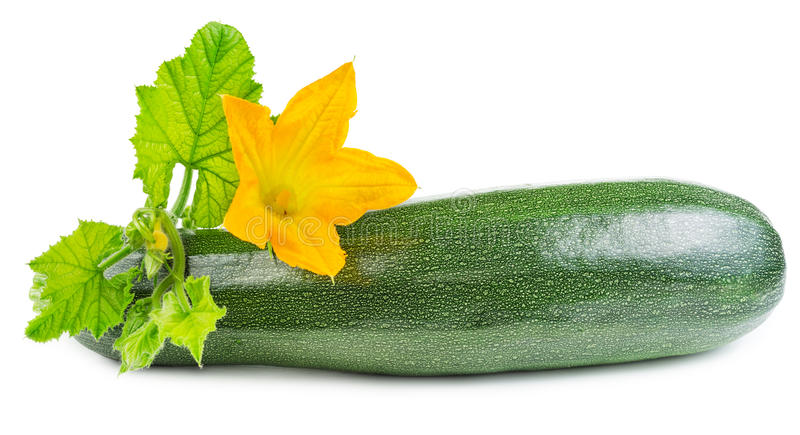 Zucchini with flower royalty free stock photos