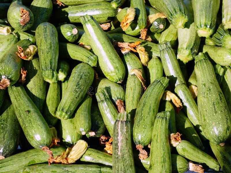 Download Zucchini freschi immagine stock. Immagine di abbondanza - 56892845